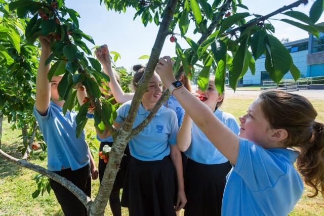 Bewdley Orchard